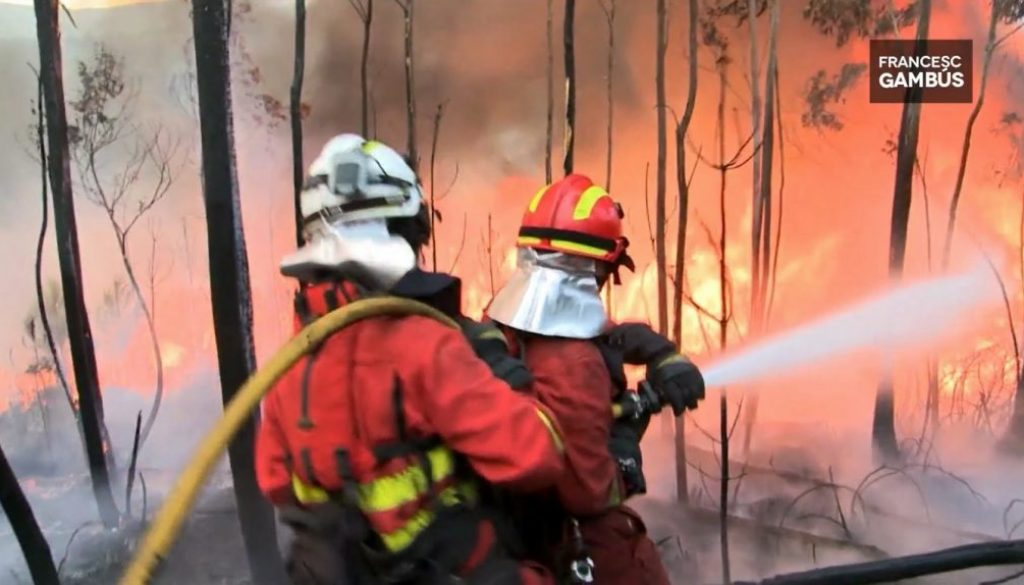 Gambus-boscos-incendis-gestio-forestal-europea