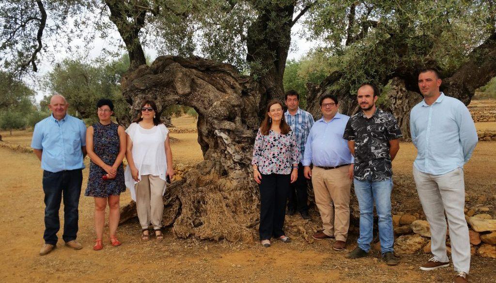 20170714-Gambús-oliveres-mil-lenàries-La-Jana-Ulldecona