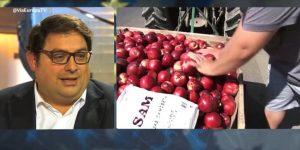 Gambús fruita dolça - Via Europa El Punt Avui TV